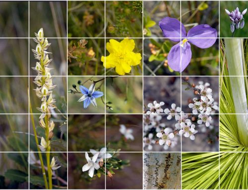 Wildflower Wonders. John May 2006