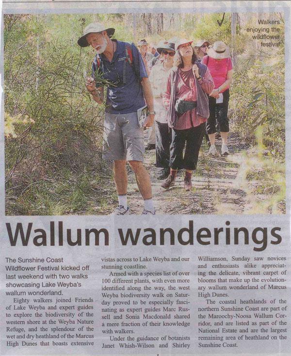 29-August-2013-Noosa-Today-Wallum-Wanderings
