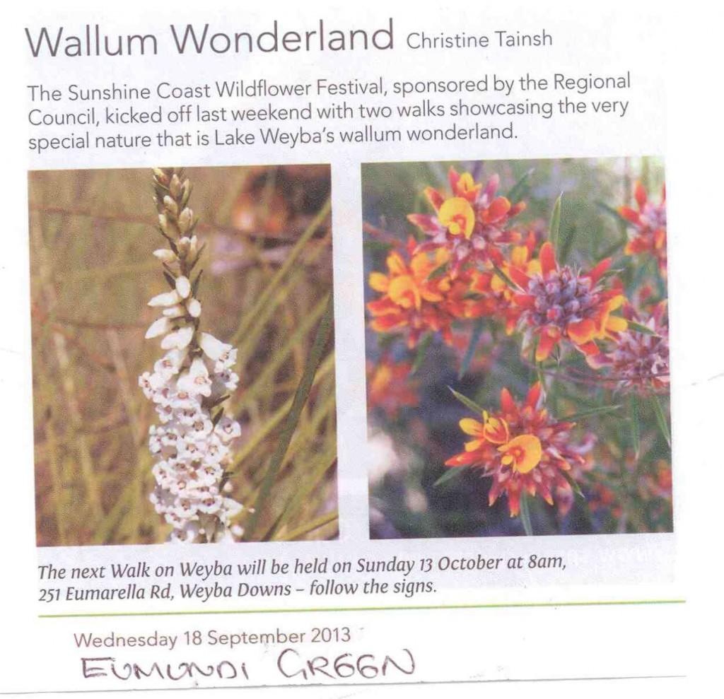Wallum-Wonderland-Eumundi-Green-180913